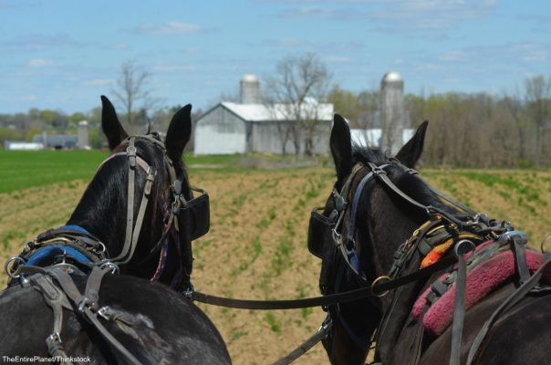 Pennsylvania Amish Country 604x400 Privacy Policy & TOS