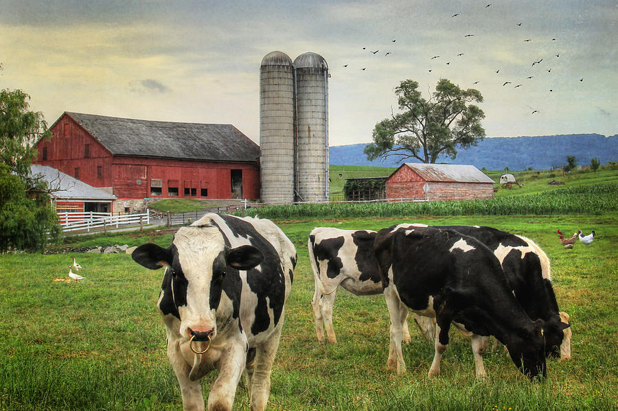 From a Different View of Amish Country