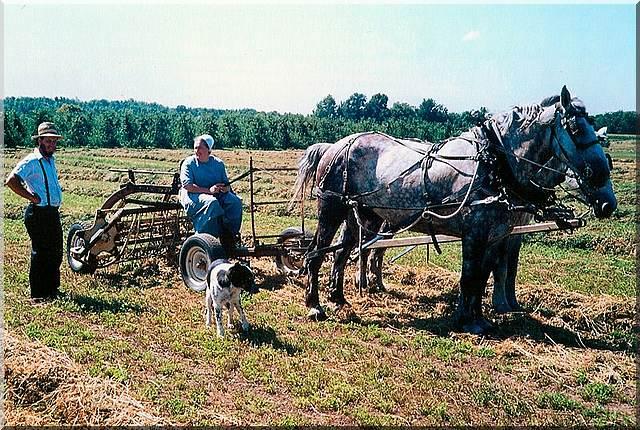Amish Life – Maintaining Social Responsibility